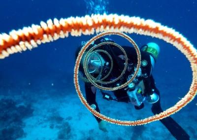 Maldive201300141