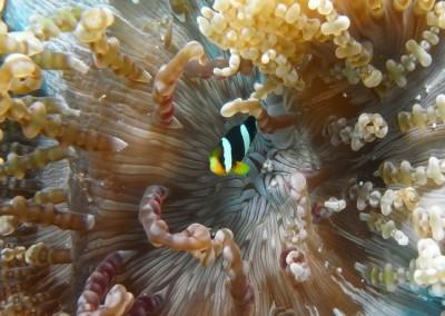 Maldive201300153